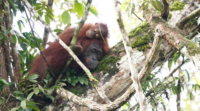 クラウドファンディングプロジェクト:生物多様性の宝庫ボルネオで植林・育林による森林再生のしくみをつくる。豊かな熱帯雨林を未来につなぎたい
