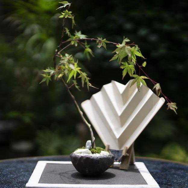 ⑧陶器コラボセット モミジ(大)