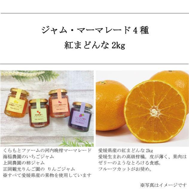 愛媛県産の手作り無添加ジャム・マーマレード4種と 産地直送のまどんな2kg